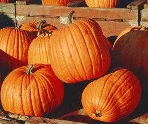 How to preserve a pumpkin